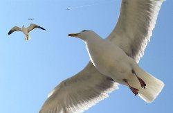 Kun die weibliche erde beziehungen und partnerschaft for Raumgestaltung vogel