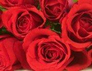 Valentinstag – 14.02.09