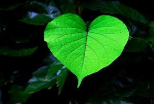 Grünes Blatt in Herzform