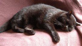 Katze fühlt sich wohl = energiereicher Platz