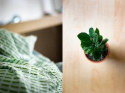pflanze-schlafzimmer(Kevin Klöcker)