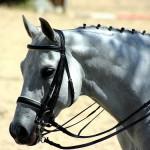 Aufmerksames Pferd (Foto: Didier-Lg)