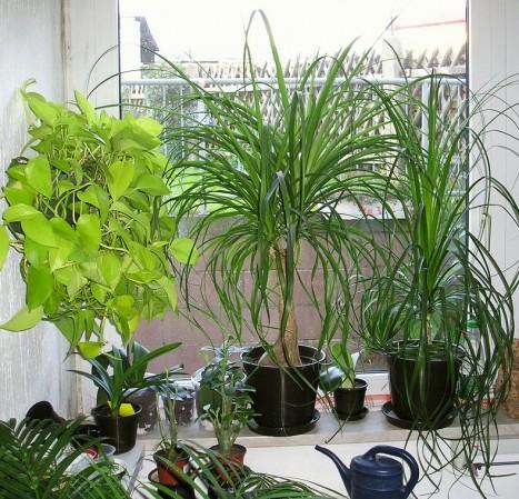 bei zimmerpflanzen aufs bio siegel achten. Black Bedroom Furniture Sets. Home Design Ideas