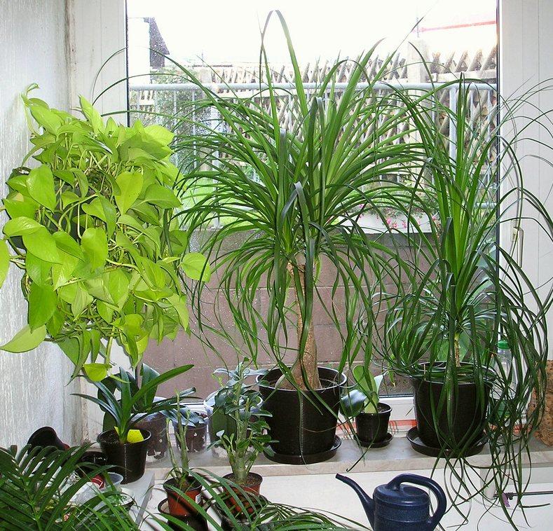 Pflanzen begutachten for Wohnzimmer mit pflanzen