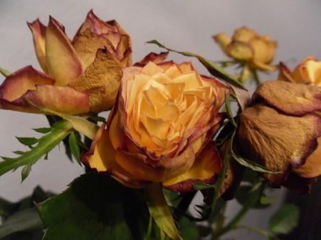 """Wer welke Rosen verschenkt, signalisiert: """"Es ist aus!"""""""