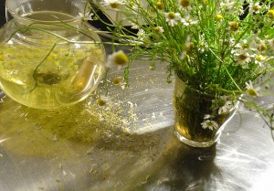 kamillentee 300x209 E Petition: Stoppt das EU Verkaufsverbot von Heilpflanzen!