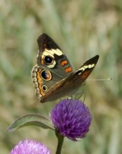 Schmetterling: Sein Flügelschlag beeinflusst den Lauf der Dinge