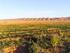 Es hat geklappt: Die Wüste grünt wieder