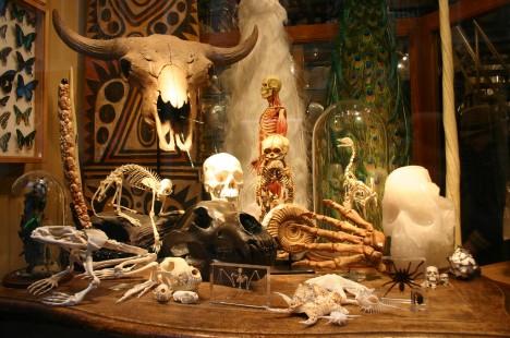 Besondere Wohnaccessoires aus dem Evolution Store New York