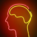 The Brain: Leuchtröhrenskulptur mit Gehirn (Foto: Dierk Schaefer)