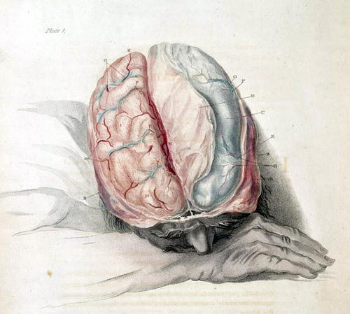 Charles Bell: Die Anatomie des Gehirns (Stich um 1802)
