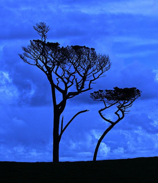 Welche Szene spielt sich hier wohl gerade ab? Ach, wenn Bäume doch nur reden könnten...