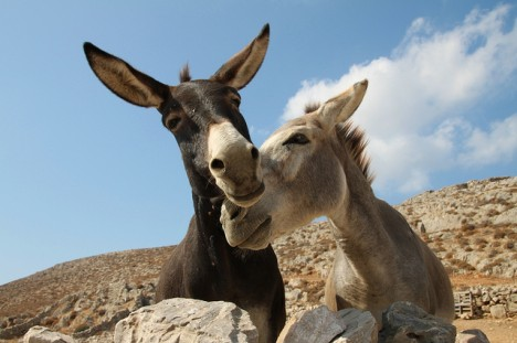 donkeys in love, Foto: Klearchos Kapoutsis