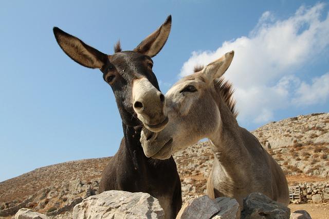donkeys in love, Foto: Klearchos Kapoutsis