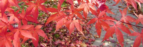 Herbstlaub, Foto (C) Irmgard Brottrager