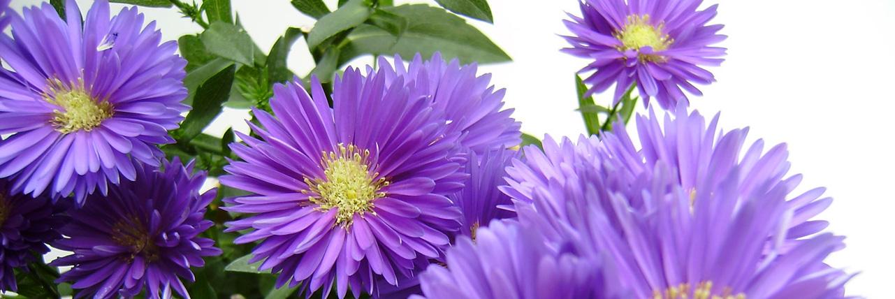 Die Farben des Spätherbstes sind Violett und Grau, sie stehen für Abschied und Transformation. Foto (C) Irmgard Brottrager