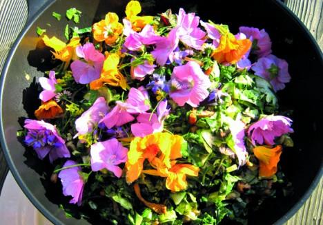 Salat mit Blüten und Pilzen, Foto (C) Bruno Weihsbrodt