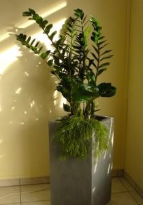 Zimmerpflanzen sind ein wirkungsvolles Gestaltungsmittel im Feng Shui. Foto: Redaktion