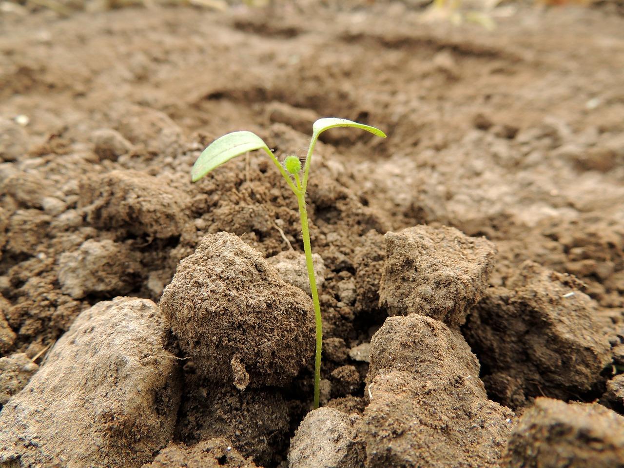 Der boden unter unseren f en eine geomantische betrachtung for Bodentypen der erde