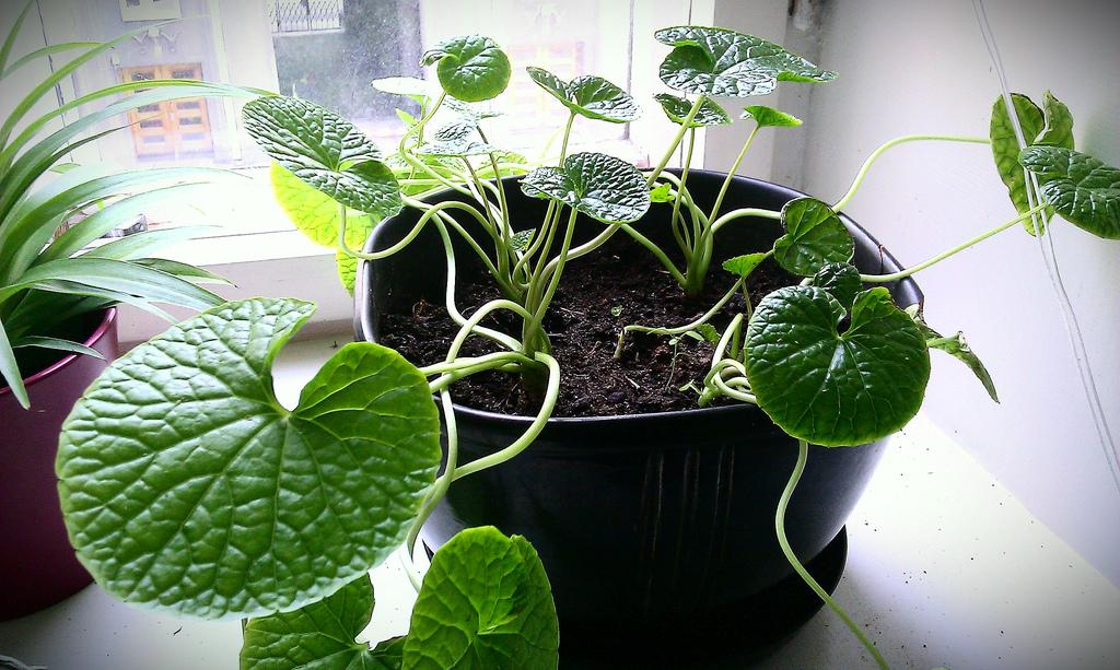 Zimmerpflanzen umtopfen gr ne pflanzen richtig umgetopft - Feng shui pflanzen schlafzimmer ...