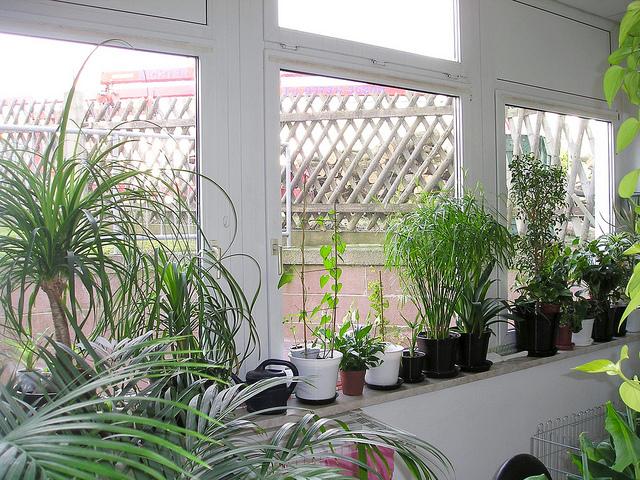 Der ursprüngliche Zweck eines Wintergartens bestand darin, Pflanzen während der Wintermonate einen lichtreichen Raum zur Verfügung zu stellen