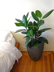 Zimmerpflanzen im Schlafzimmer wirken sich positiv auf die Raumluft aus. Doch Achtung: Nicht jede Pflanze ist gleich geeignet!