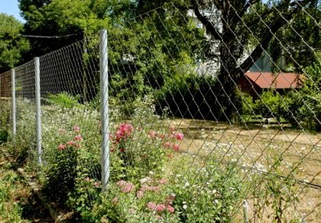 Der Guerilla-Garten in Andritz vom Radweg aus gesehen. Foto (C) Irmgard Brottrager