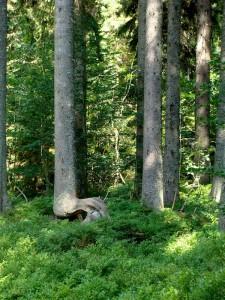 Ein Massivholzparkett wirkt durch seinen natürlichen Charakter. Foto: H.Seipel