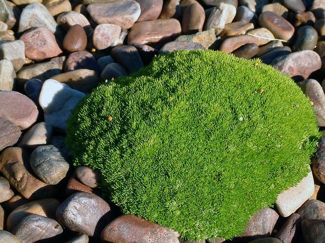 Steingärten als pflegeleichte Garten-Alternative
