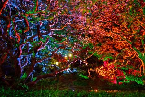 Exotisch bunte Gartenbeleuchtung: Was auf den ersten Blick schön anmutet, strahlt bei näherer Betrachtung zu viel Unruhe aus. Das lässt sich harmonischer gestalten!