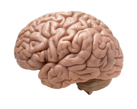 Blockaden entstehen im Gehirn