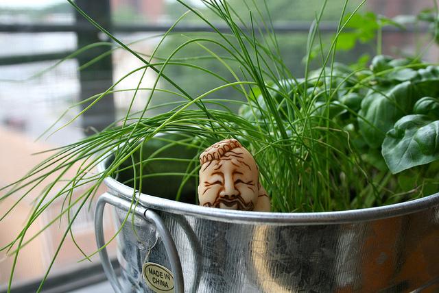 Eine einfache Zimmerpflanze kann einem Raum bereits deutlich mehr Harmonie verleihen