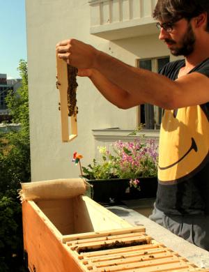 gro stadt imkern exotischer honig vom eigenen balkon. Black Bedroom Furniture Sets. Home Design Ideas