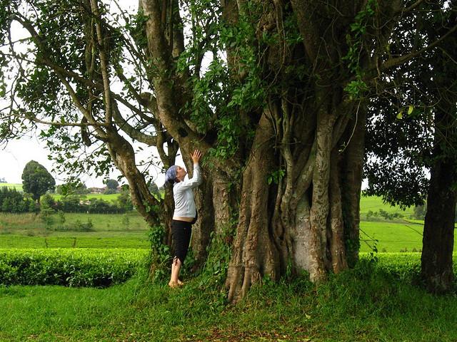 Wer heutzutage mit Bäumen spricht, wird schnell als verrückt abgestempelt. Dabei haben uns Bäume tatsächlich viel zu erzählen...