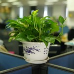 Pflanzen als wichtige Motivationshelfer im Büro