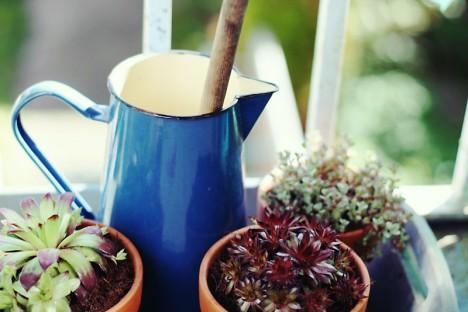 Pflanzen auf dem Balkon sind ein Symbol für Leben. Und natürlich brauchen Pflanzen Pflege