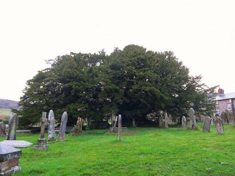 Uralte Eibe auf einem Friedhof in England, Foto (C) Peter / flickr