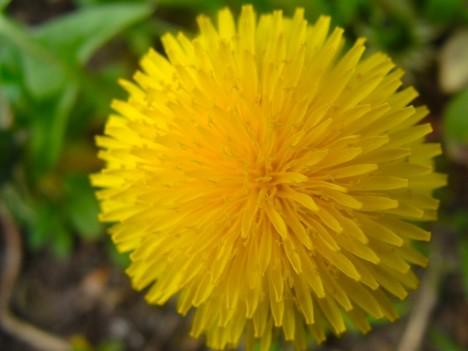 Feuer oder Erde? Welcher Wandlungsphase wird Gelb zugeordnet? Foto: © Hedwig Seipel