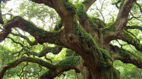 Gerade das Holz der Eiche ist durch ihren hohen Anteil an Gerbstoffen besonders widerstandsfähig und resistent gegen Fäule und Schimmelbefall und besonders wertbeständig