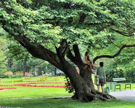 Lieblingsplatz Baum: Gar nicht so einfach in der Großstadt, oder etwa doch?