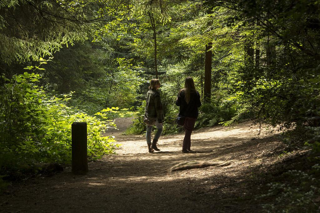 Ein Waldspaziergang: Ideal zum Stressabbau