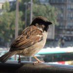 In der Stadt: Tiere gehören dazu