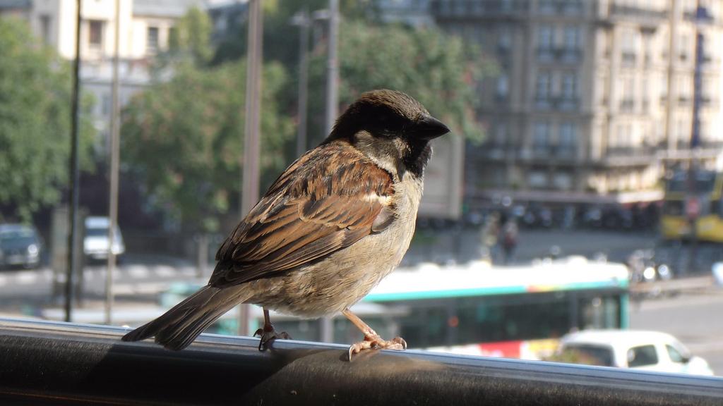 Spatz in der Großstadt: Viele Tiere haben sich an unsere urbanen Lebensräume angepasst