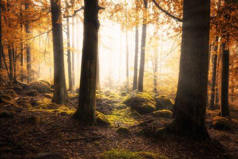 Was wäre ein Märchenwald ohne Moos?