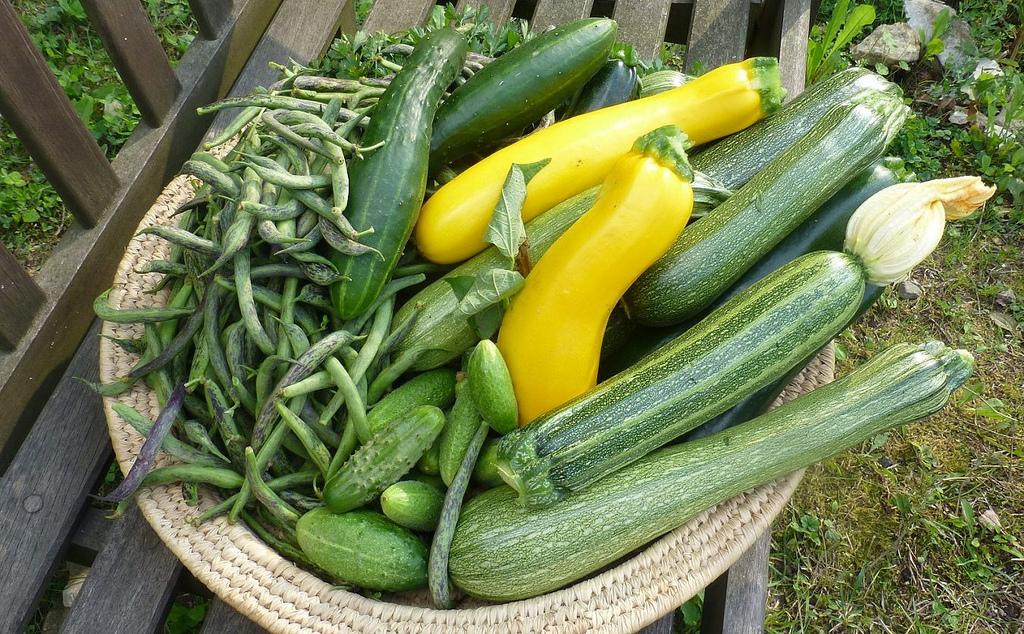 Bitterstoffe in Zucchini können Vergiftungen hervorrufen