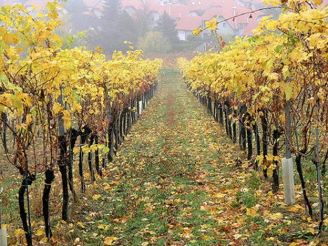 Weingarten, Foto (C) Roberto Verzo / flickr