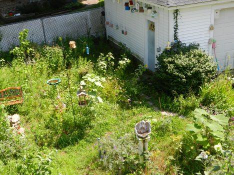 """""""Unordentliche"""" Gärten sind häufig ein Paradies für Schmetterlinge und Vögel"""