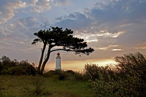 Windflüchter wie hier auf Hiddensee zeigen, wie anpassungsfähig Bäume sind