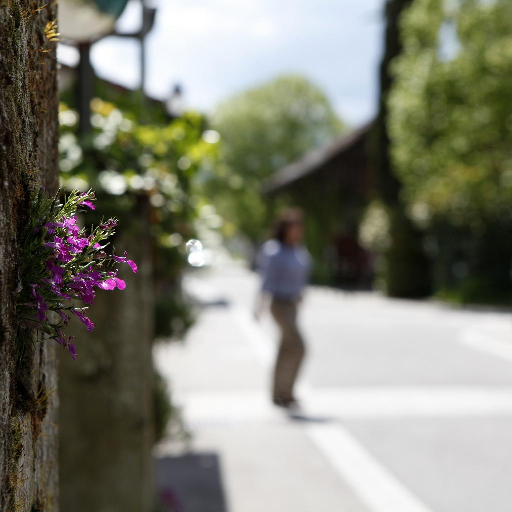 Mauerblümchen: Das mildere lokale Klima in unseren urbanen Zentren lässt so manchen Spezialisten unter den Pflanzen wachsen