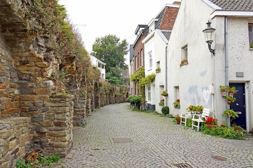 Alte Stadtmauer in Maastricht: Erstaunliches gedeiht in ihren Fugen
